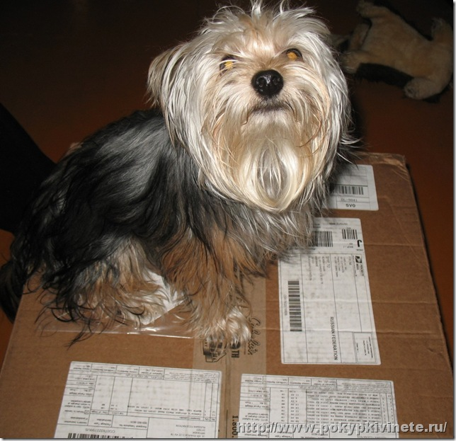 Собака и посылка с кабеласа