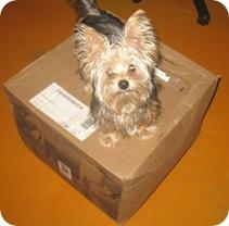 cabelas dog собака дождалась посылку от кабелас.ком